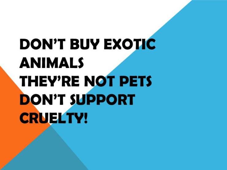 DON'T BUY EXOTIC ANIMALS