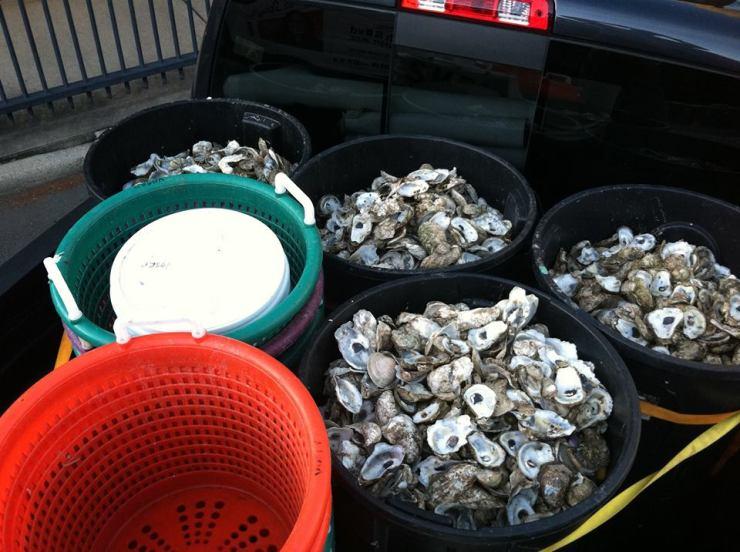 VOSRP Oyster shells