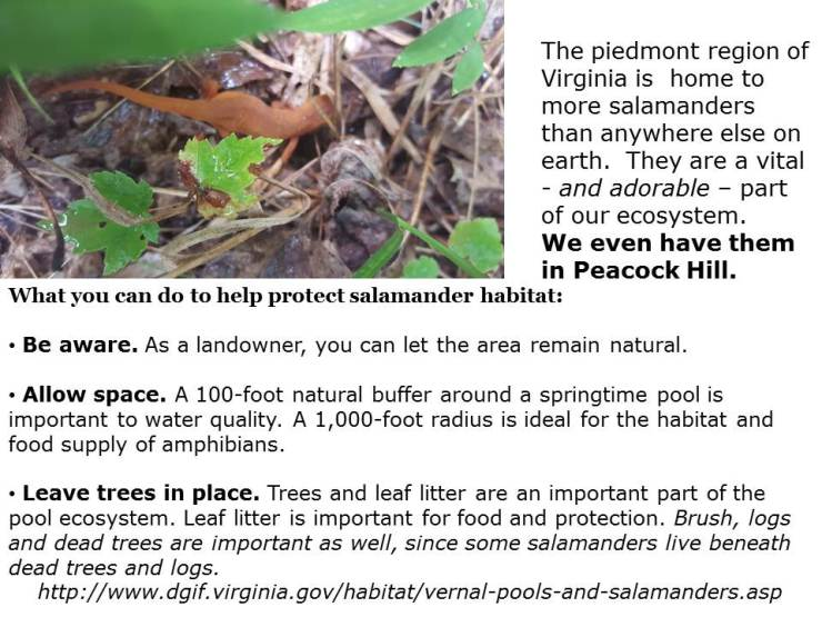 Protect Salamanders.... leave dead trees where they are